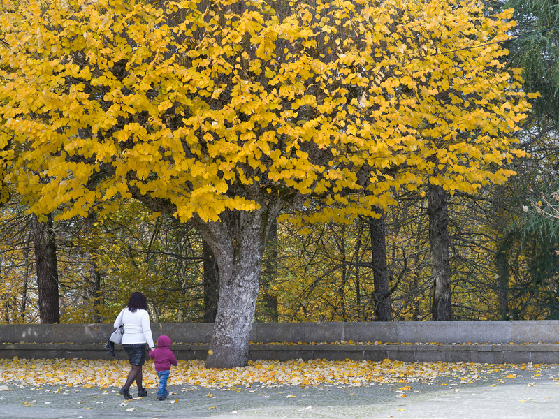 Woman walking with her child under autumn tree, Shrine of Our Lady of Remedies, Lamego Municipality, Viseu District, Northern Portugal, Portugal