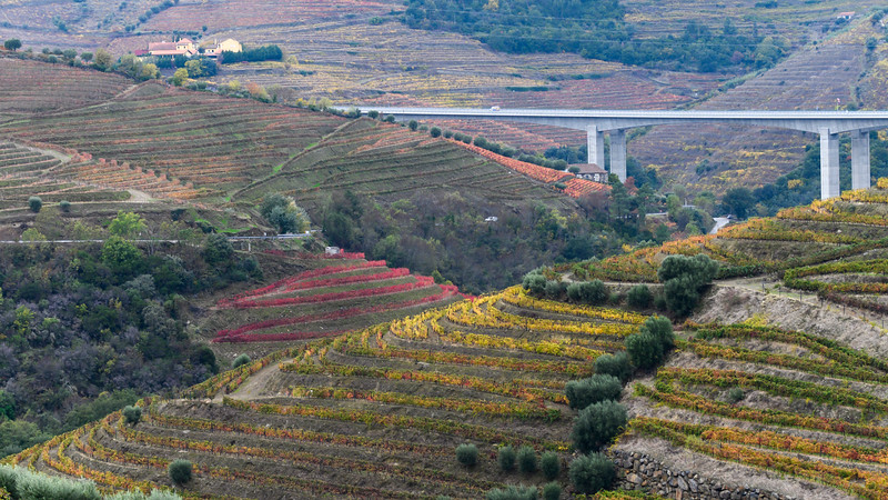 Elevated view of field, Douro Valley, Portugal