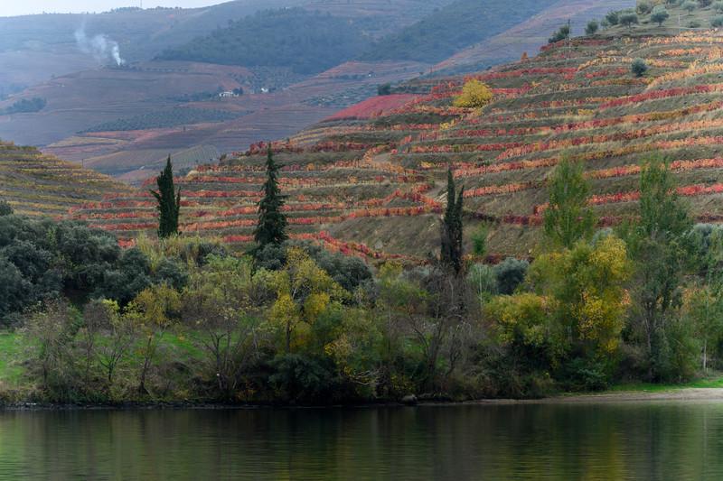 Scenic view of riverbank, Douro River, Douro Valley, Portugal