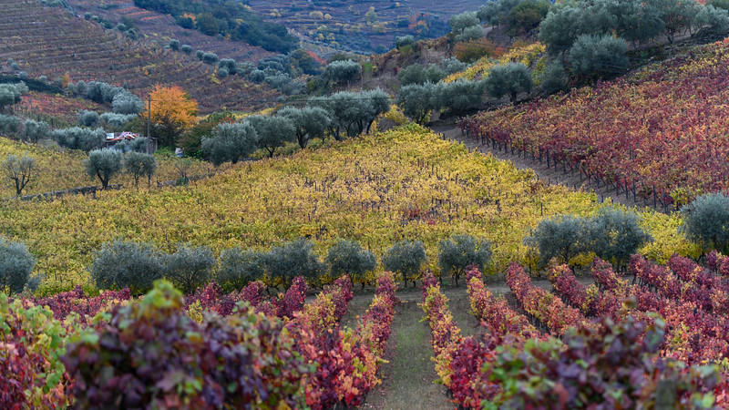 Scenic view of field in autumn, Peso da R�gua, Vila Real, Douro Valley, Portugal