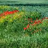 Field, Northern Poland