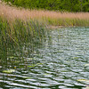 lake scene, Suwałki