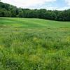 Field, Suwałki