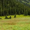 Meadow, Tatra Mountains