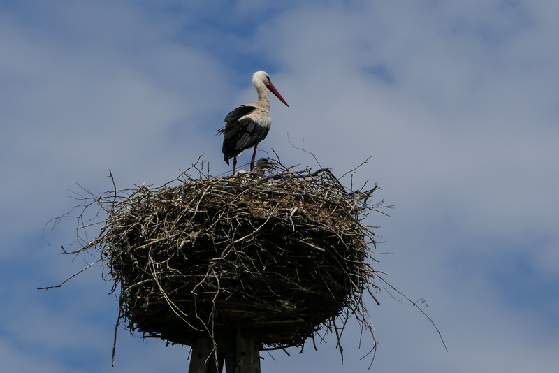 Stork's Nest, Northern Poland
