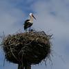 Stork's Nest, Northern Poland