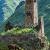 Mule grazing beneath the medieval tower at Sno, Kazbegi