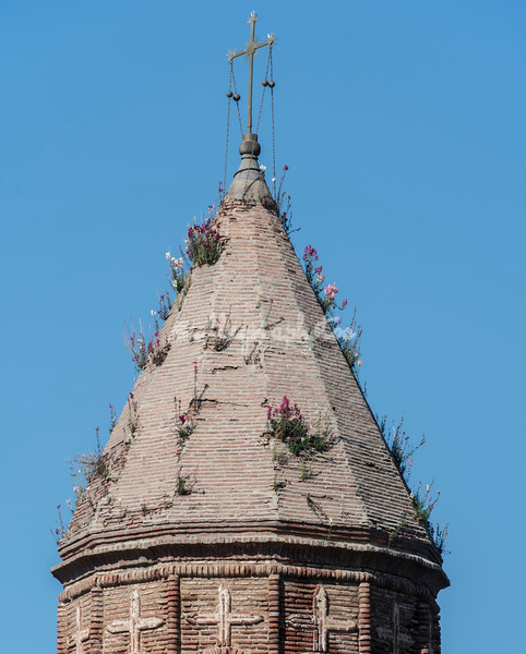 Flowers growing from Church tower roof, Signaghi