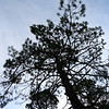 Silhouette of single tree against sky, Sierra De Cazorla, Jaen Province, Spain