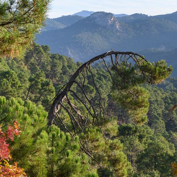 Scenic view of forest, Sierra De Cazorla, Jaen Province, Spain