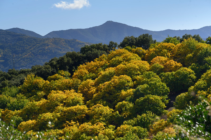 Scenic view of treetops in a forest of Benadalid, Malaga Province, Spain