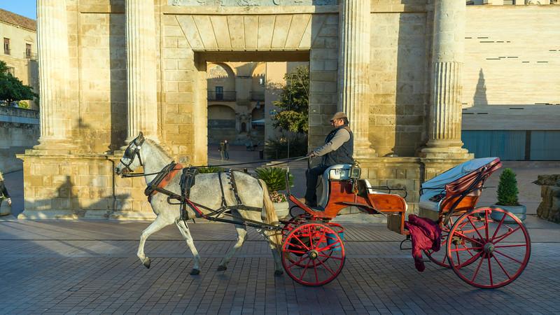 Man riding a horse cart, C�rdoba, C�rdoba Province, Spain