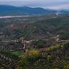 Olive orchard growing on hills, Hornos, Jaen Province, Spain
