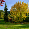 Autumn trees in a park, Cazorla, Jaen Province, Spain