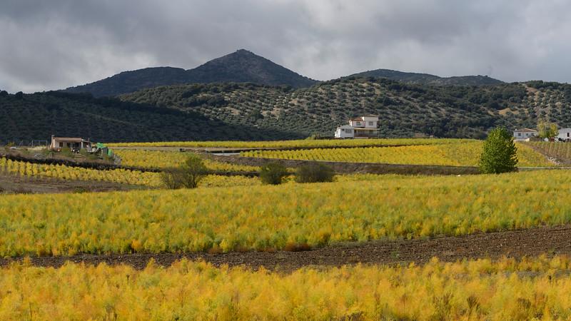 Farmland in Montefrio, Granada, Spain