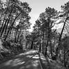 Scenic view of road, Sierra De Cazorla, Jaen Province, Spain