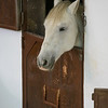 Profile view of horse peeking out of the stable door, Ronda, Malaga Province, Spain
