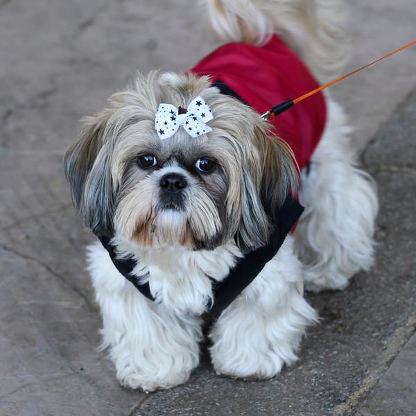 Portrait of a cute puppy, Ronda, Malaga, Andalusia, Spain