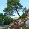 Scenic view of trees, Seguray Las Villas Natural Park, Jaen Province, Spain