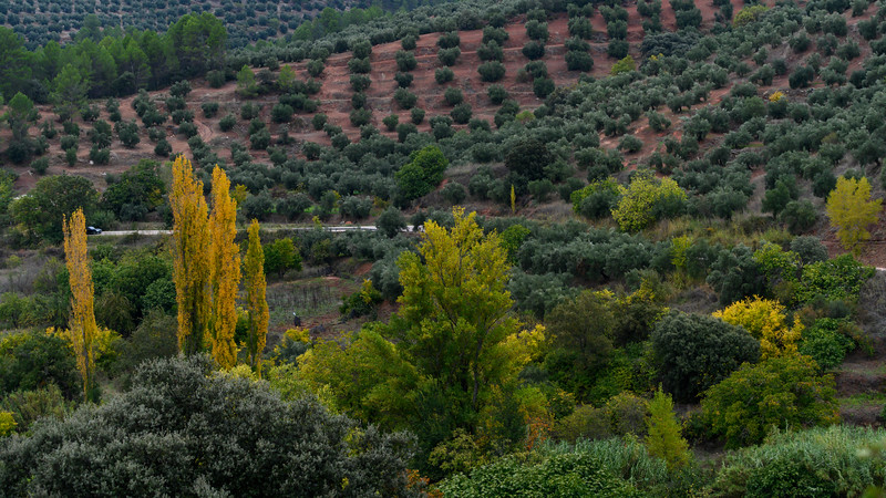 Olive orchard growing on hills, Hornos, Jaen Province, Spain