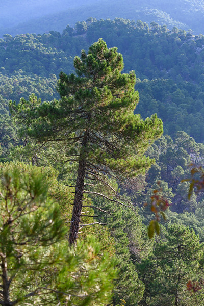 Scenic view of forest, Sierra De Cazorla, Jaen Province, Spain