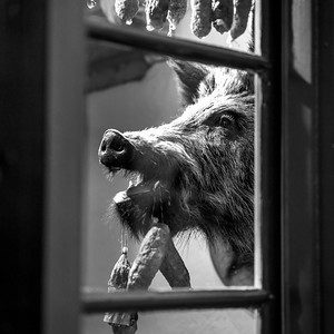 Head of a boar seen through window, Gamla Stan, Stockholm, Sweden