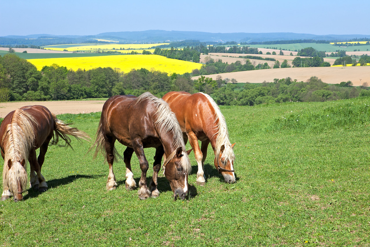 8478 Horses*