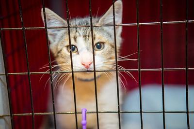 MACY'S SPCA PET ADOPTION