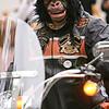 Anche una scimmia in Parade.