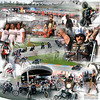 HARLEY-DAVIDSON XR1200 TROPHY<br /> Autodromo di Franciacorta<br /> 15-16-17 Maggio 2009