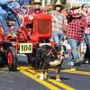 A dog leads a parade float in Stratham's 300th Anniversary Parade held on Sunday, 9-25-2016, Stratham Town Center-RT 33.  Matt Parker Photos