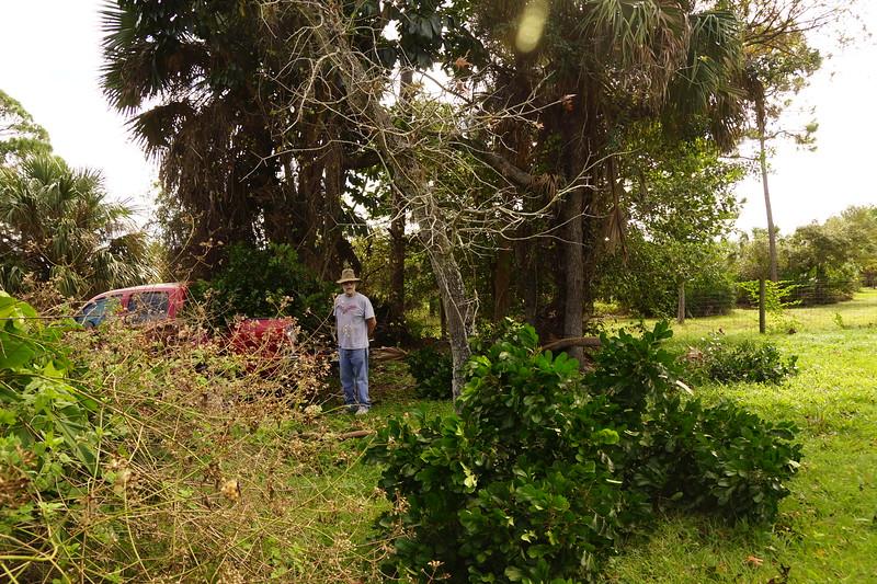 clearing hurricane damage