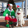 """Matheus Candido in his elf outfit with """"Rio"""" a Great Pyrenees in his santa hat and green sunglasses at the 2019 """"Main Street Christmas"""",  Experience Hampton Christmas Parade on Saturday 12-7-2019, Rt. 1 Hampton, NH.  [Matt Parker/Seacoastonline]"""