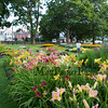 The gardens at Prescott Park, on Friday 8-9-2019, Portsmouth NH.  Matt Parker Photos