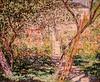 """Denver Art Museum – Monet """"The Garden at Vétheuil"""""""
