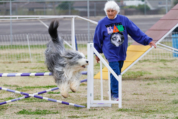 CANINE AGILITY CLUB AKC TRIALS