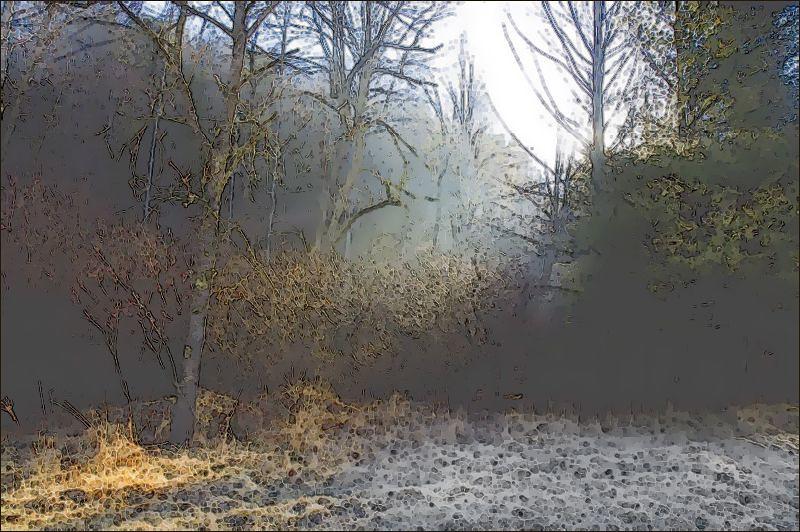january field