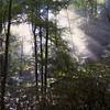 Slanting sun on Goose Creek