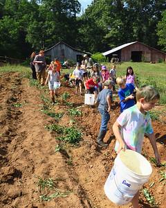 Farm to School Potato Digging