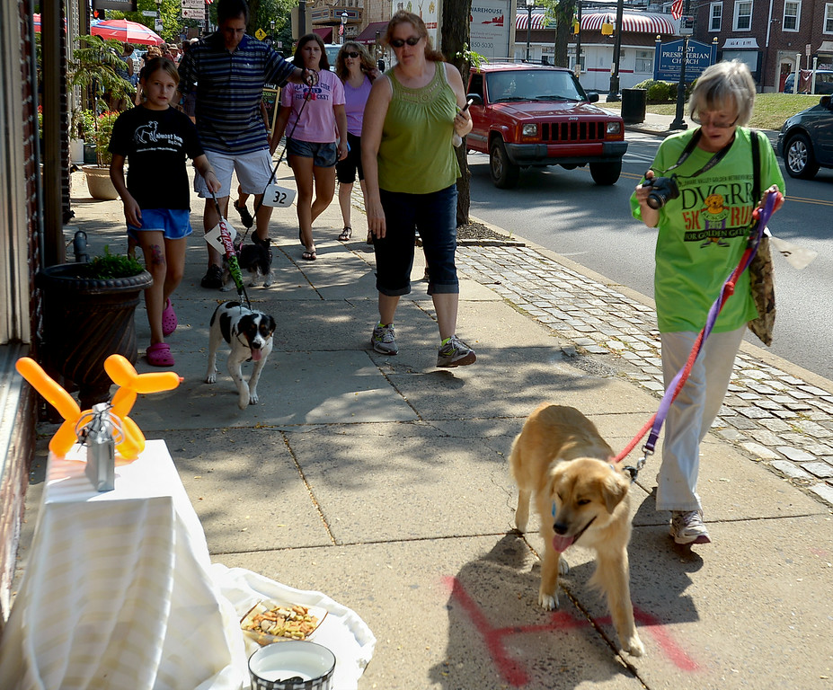 . Several businesses along Butler Ave. set out water and biscuits for the parading pooches during Ambler Main Street\'s Dog Days Saturday, Aug. 9, 2014.  Montgomery Media staff photo by Bob Raines