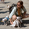 Karen Kingma keeps her three mixed Chihuahua's, from front right, Penny, Nigel and Pookles, calm is the swirl of dogs waiting for the start of the Ambler Dog Days Parade Saturday, Aug. 9, 2014.  Montgomery Media staff photo by Bob Raines