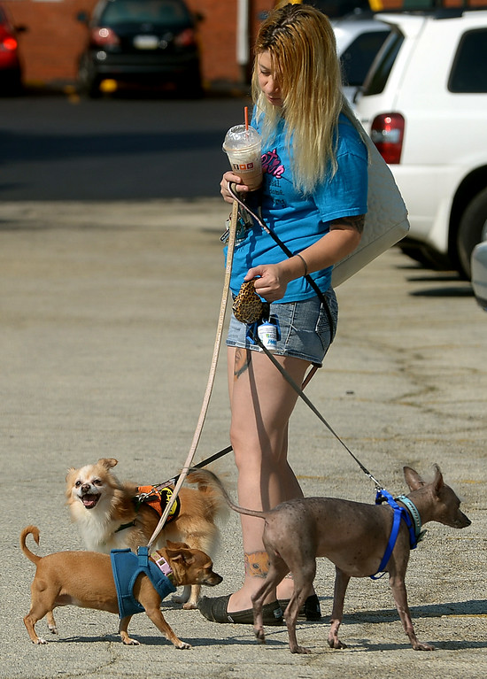 . Annie Damico is in danger of looking like a Maypole as her dogs wrap their leashes around her during Ambler\'s Dog Days Saturday, Aug. 9, 2014. The three dogs are, from right, Gizmo, a Chinese hairless crested, Mookie, a Chihuahua, and Fluffy, a Chihuahua/Pomeranian mix.