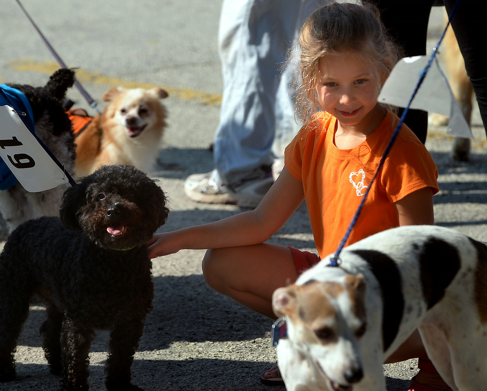 . There are just too many dogs for Ella Kanaplue to pet and not enough time before the Ambler Dog Days Parade Saturday, Aug. 9, 2014.  Montgomery Media staff photo by Bob Raines