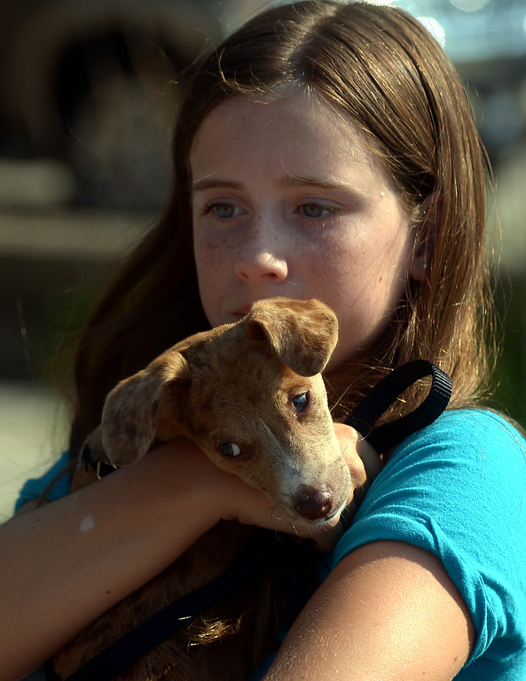 . Riley Pearse holds her rescue dog, Jack, as she waits to register for the Ambler Dog Days Parade Saturday, Aug. 9, 2014. Jack and Riley won the Judges\' Choice Award following the parade. Montgomery Media staff photo by Bob Raines