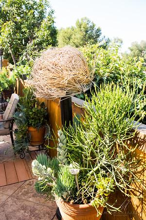 Cherie's Garden