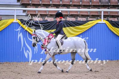 Class 1 First Ridden Pony