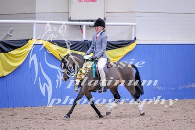 Class 2 Childs Sm Show Hunter Pony