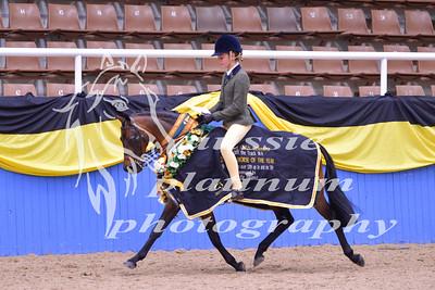 Class 29 Med Show Hunter Pony