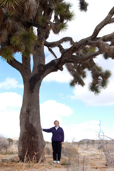 Patty Fienup and one very big Joshua Tree