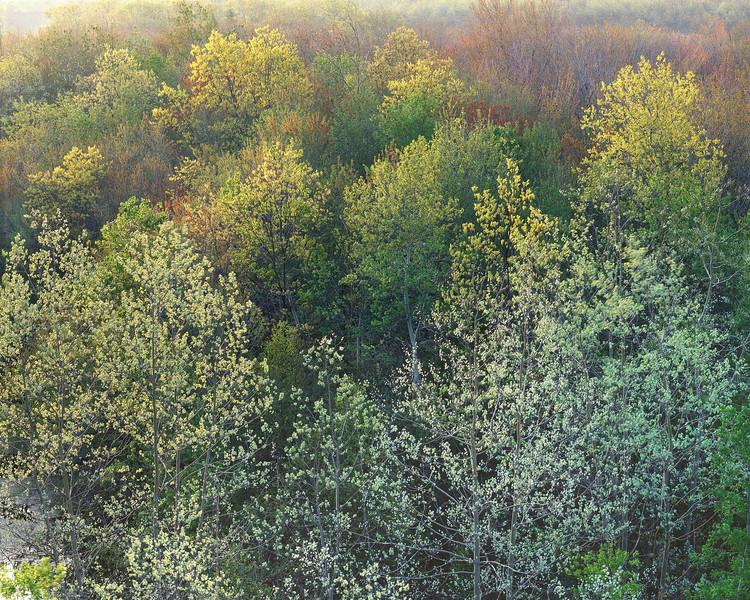 Spring Sunrise II